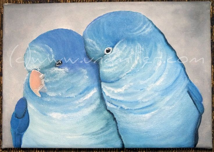 Blue Quaker Parrots -Lovely Valentines Day gift idea x  5 x 7 inch pre stretched canvas Ready to Hang Acrylic $50.00 +p&h
