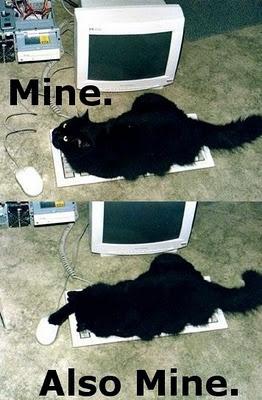 cat shopping or shopping cat..