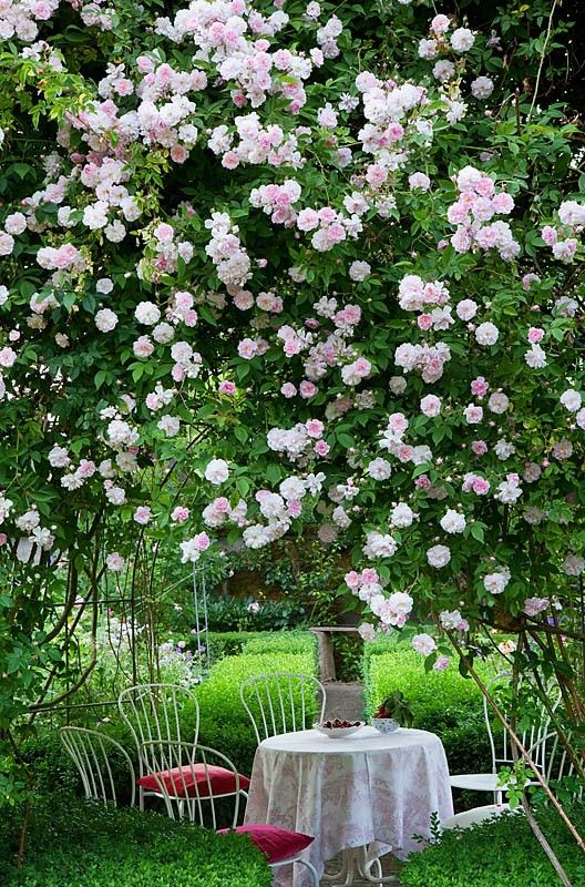 I have just the spot in my garden for these climbing roses. Now I just need to find the blooming rose bush!