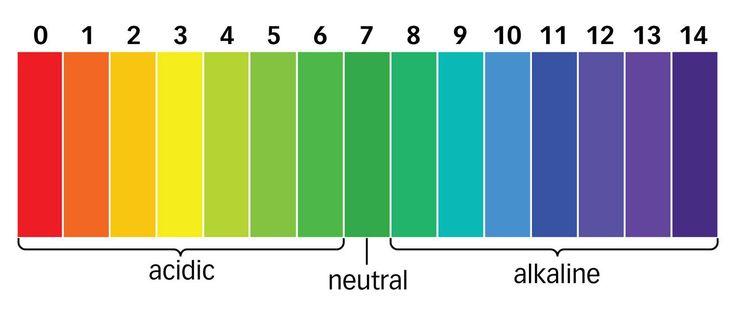 Come funziona? L'equilibrio acido base del sangue.