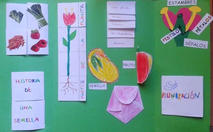 """Hemos terminado el lapbook de las plantas. Esta presentación es una muestra del trabajo hecho.                 LAPBOOK """"LAS PLANTAS"""". by Sl..."""