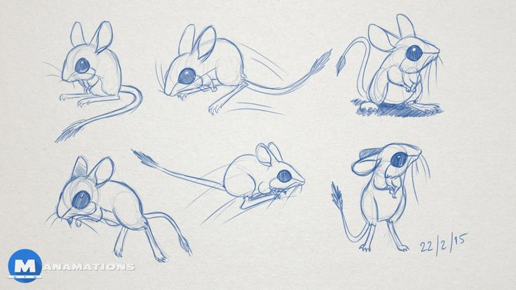 Spinifex Hopping Mouse Character Design - By Manamations