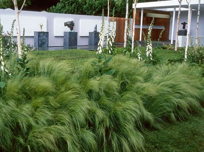 Modern contemporary garden with grasses and silver birch for Landscape design using ornamental grasses