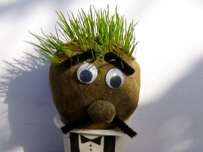 Grow a grass head: Be patient, it will seem like nothing is happening and then before you know it, your grass head will need a haircut!