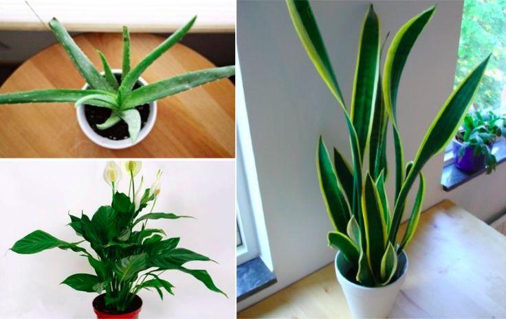 9 plantes efficaces pour purifier l'air intérieur