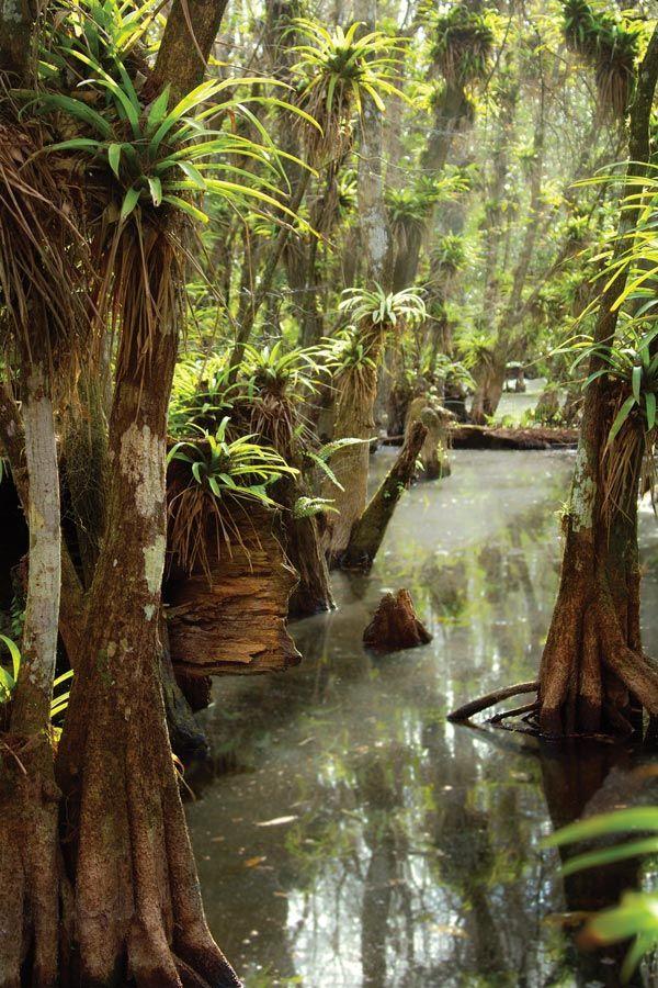 Fakahatchee Strand Preserve State Park, Florida