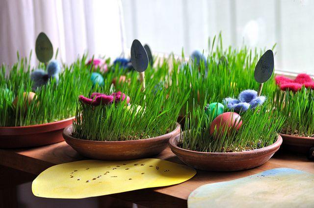 Wheat grass Easter baskets