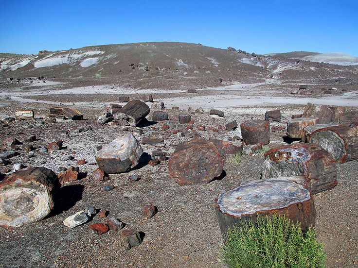 10 best petrified forest national park images on pinterest petrified logs in petrified forest national park sciox Choice Image
