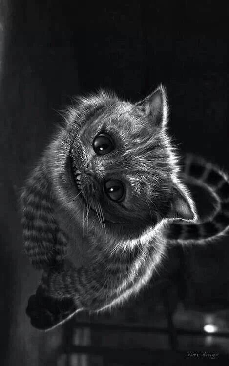 Cheshire Cat. It almost looks like a real kitty...