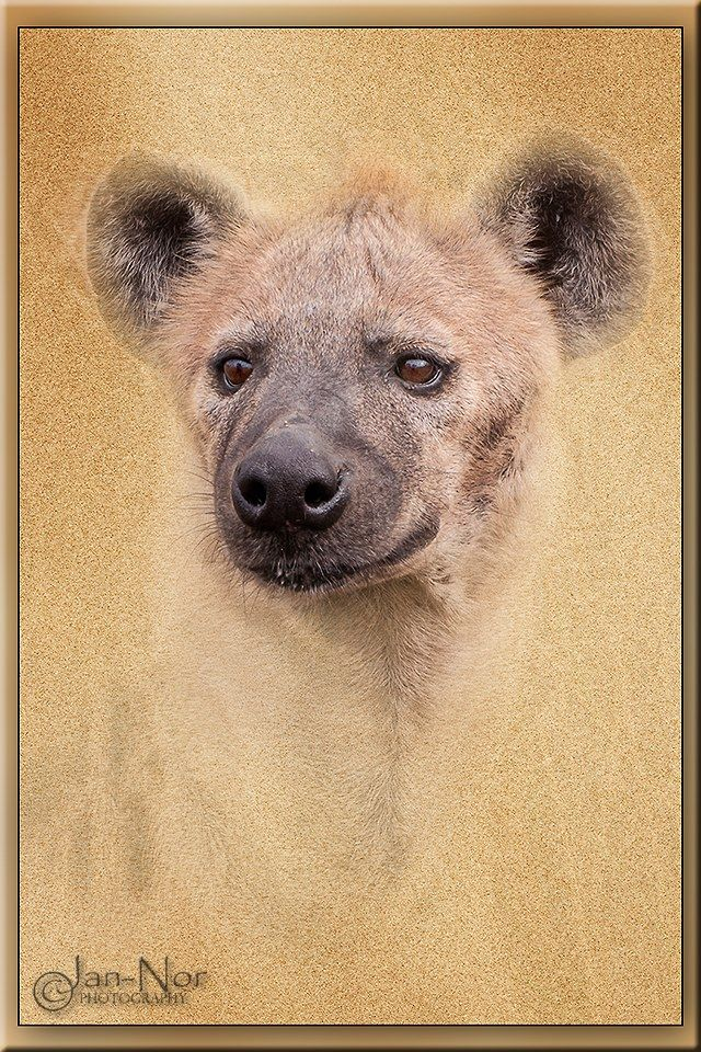 The Hyena: Grunge effect