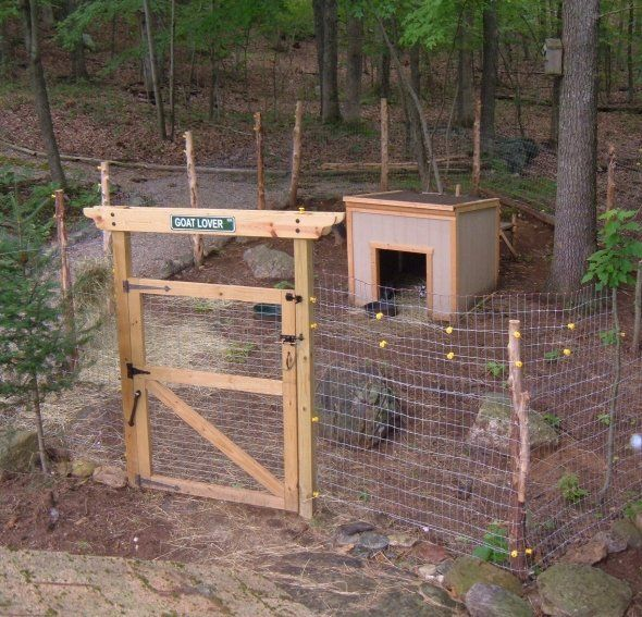 DIY goat pen and tips for goats.