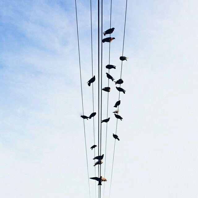 Bangun pagi? Buat gw itu susah bgt,selain gw org yg suka begadang,ketergantungan gw pada kopi yg mungkin bikin gw susah tidur.Tp waktu itu tiba2 gw bangun pagi,ya krna ada janji buat keliling kota pakai sepeda,dan ternyata banyak keragaman pagi hari yg udh gw lewatkan slama ini,ya kaya photo ini,sederhana sih,cuman burung2 yang bertengger di kabel listrik,tp bagi gw moment ini luar biasa bgt 😁 munkin ini reward gw krna gw udh bangun pagi.