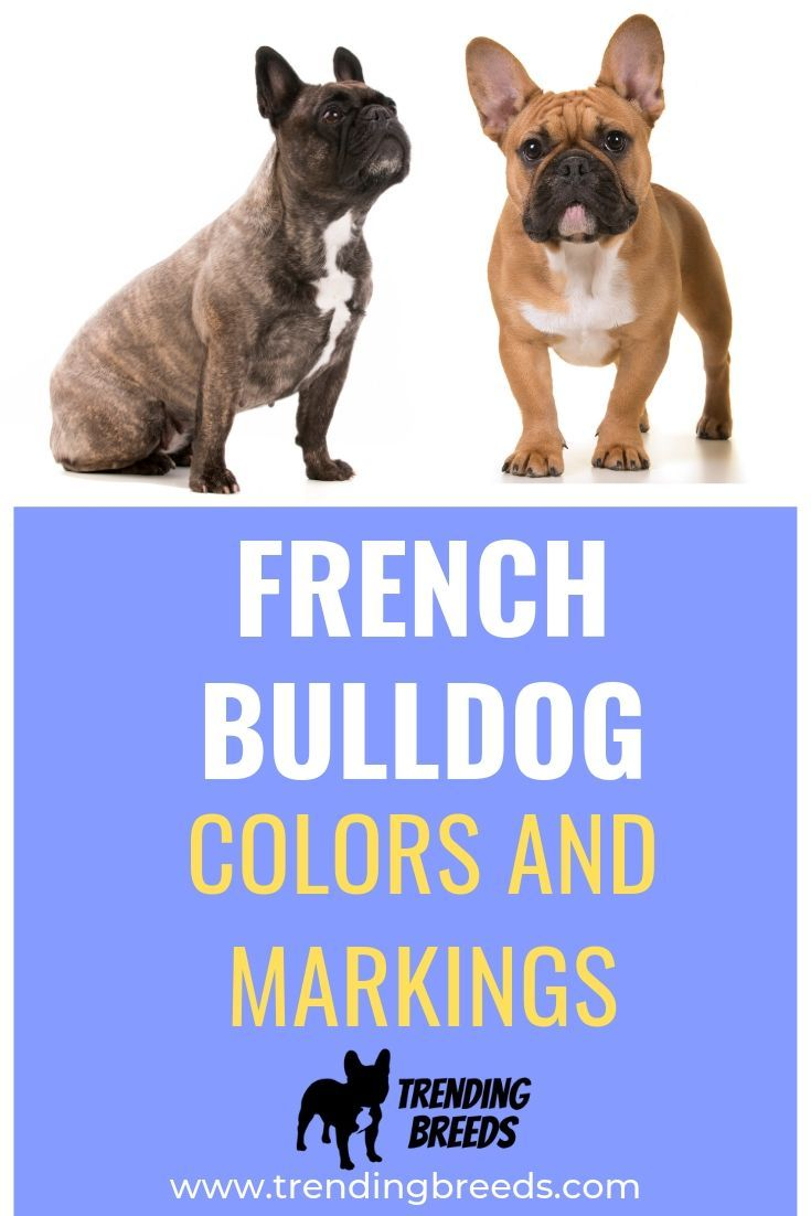 French Bulldog Colors And Markings French Bulldog Puppies French Bulldog Names Blue Fawn French Bulldog