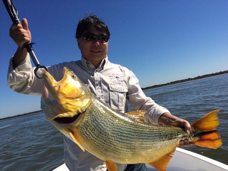 Pescaria de Dourado em Paso de la Patria, Argentina.