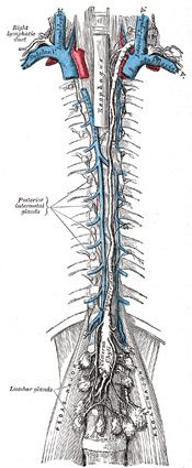 greys thoracic cavity - Google Search