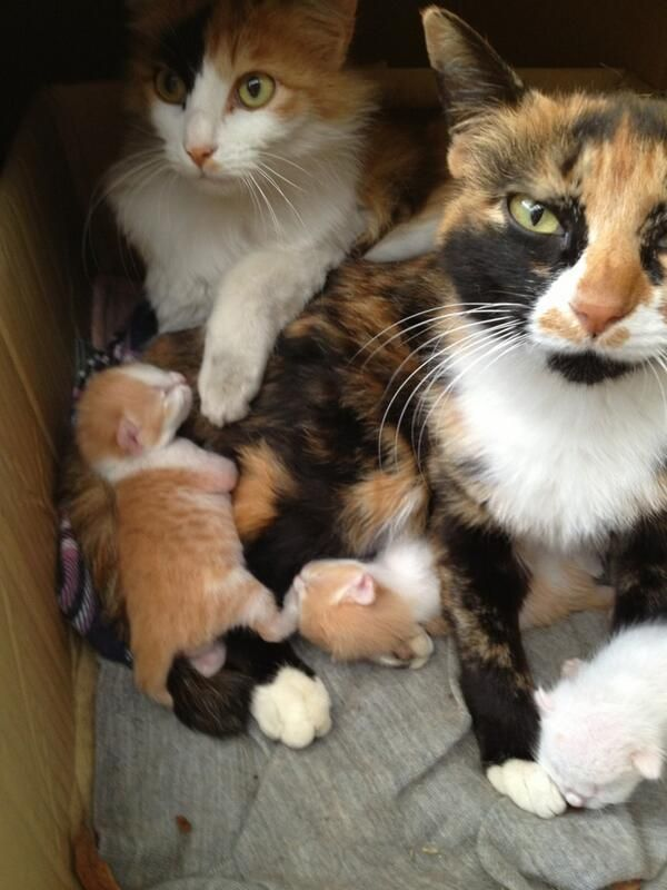 New family  (via korino1983)
