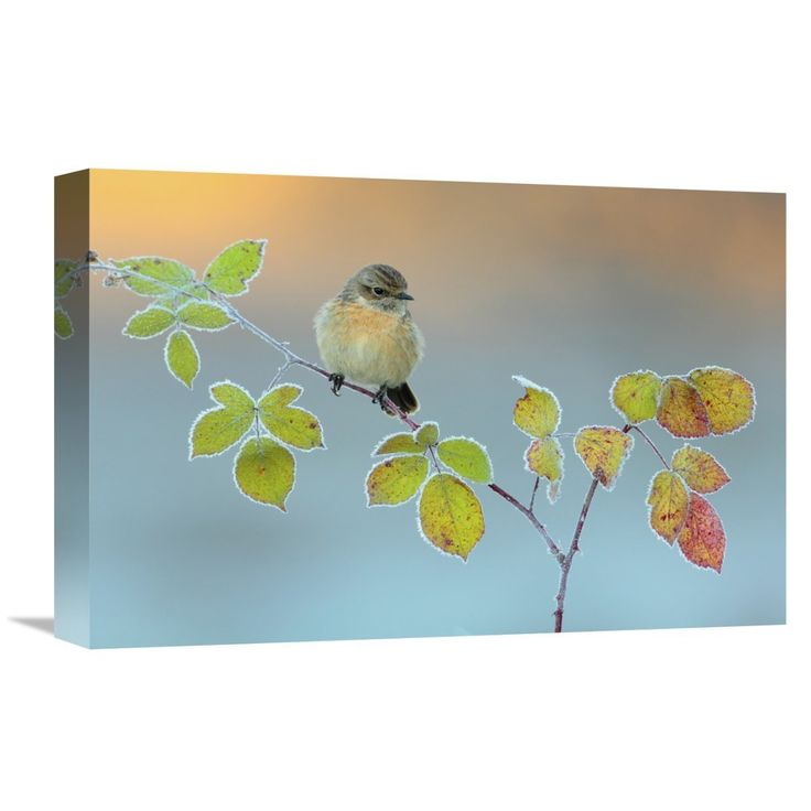 Global Gallery, Andres Miguel Dominguez 'Winter Colors' Stretched Canvas Artwork
