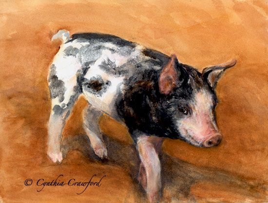 Piglet-watercolor ©  by Cynthia Crawford