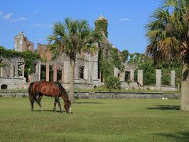 Reachable only by ferry or kayak, with a limit of 300 visitors daily and only one small inn, Cumberland Island, GA maintains its reputation as one of America's most pristine seaside regions.