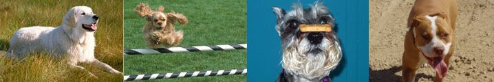 San Francisco dog trainer and puppy trainer. Expert Private Dog Training for the Bay Area.