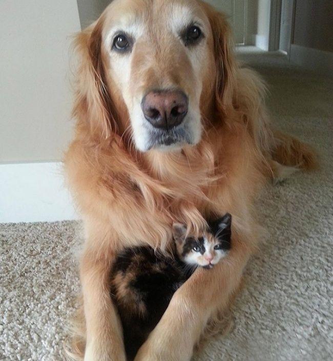 20 Υπέροχες Φωτογραφίες που Αποδεικνύουν ότι μία Γάτα και ένας Σκύλος μπορούν να Γίνουν οι Καλύτεροι Φίλοι!