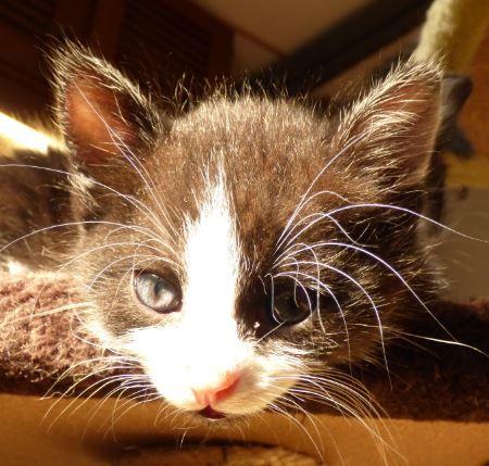 Michi in der Sonne