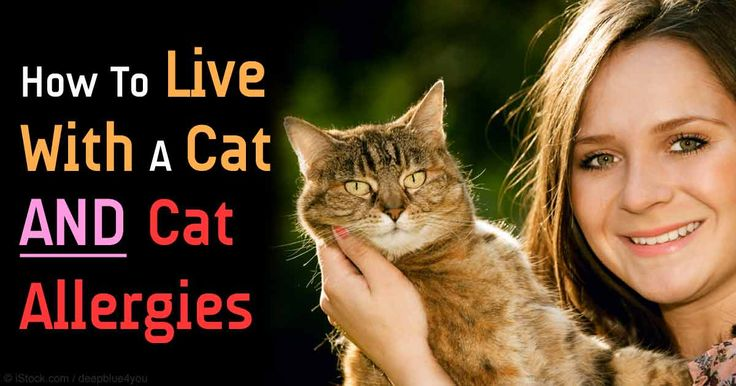 Cat breeds that may be a good choice if you are allergic to cats include the Balinese, Russian Blue, Siberian, Devon and Cornish Rexes, and more. http://healthypets.mercola.com/sites/healthypets/archive/2015/08/21/10-hypoallergenic-cat-breeds.aspx