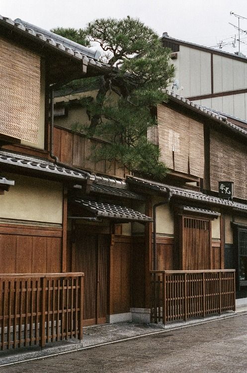 Traditional Street Japan - looks like the pine tree is reaching beyond the confines of tradition to enjoy the freedom of open sky!