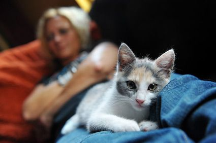 If your cat cries at night, youre not alone. Cats get noisy for different reasons at different stages in their lives.     Kittens often like to play a...