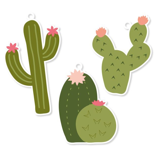 Pin On Fiesta De Cactus