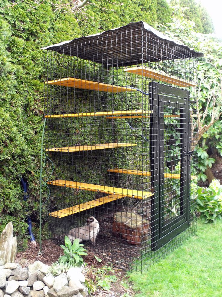 17 best images about cat run on pinterest cat houses for Exterior enclosure