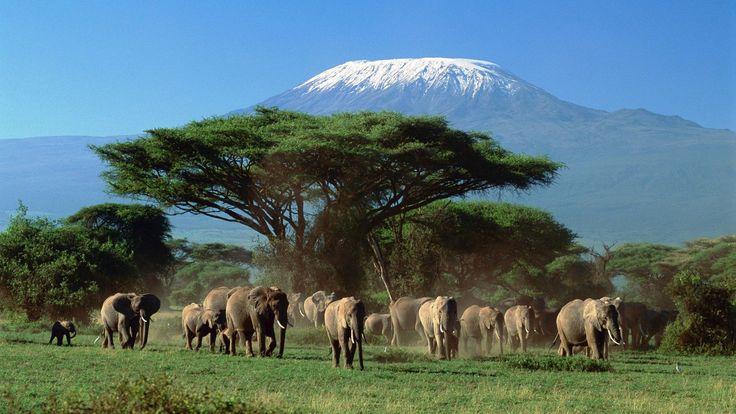 Гора Килиманджаро.