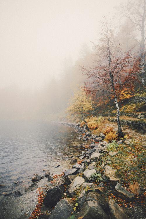misty autumn shore