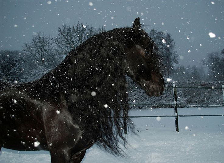 Horses In Snow | horse in snow storm wallpaper