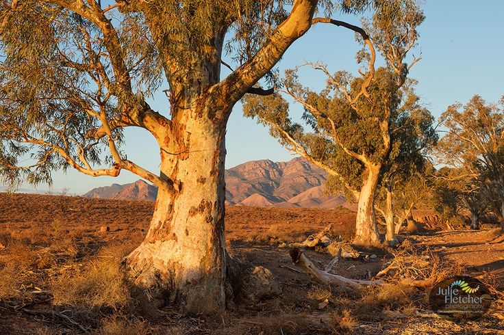 Julie Fletcher Photography - Flinders Ranges