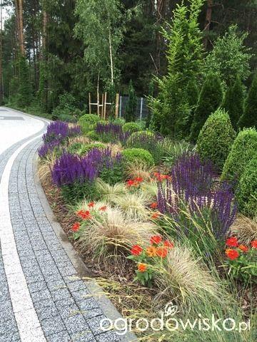 Roztoczańskie klimaty - strona 686 - Forum ogrodnicze - Ogrodowisko