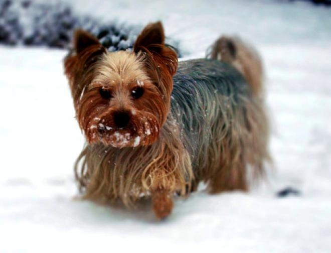 Dog Breeds That Shouldn T Live With Cats