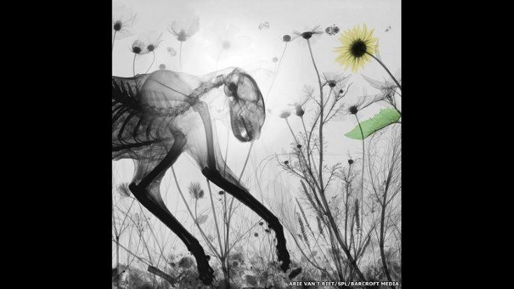 Radiografía a color de un gato con flores silvestres. Arie van't Riet SPL Barcroft Media - 5 (© Derechos Reservados de la British Broadcasting Corporation Corporación Británica de Radiodifusión 2014)