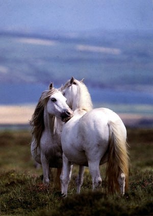 babiesHors Grooms, Hors Pictures, White Hors, Hors Show, Sweets Nothing, Hors Pics, Beautiful Creatures, Butterflies Kisses, Wild Horses
