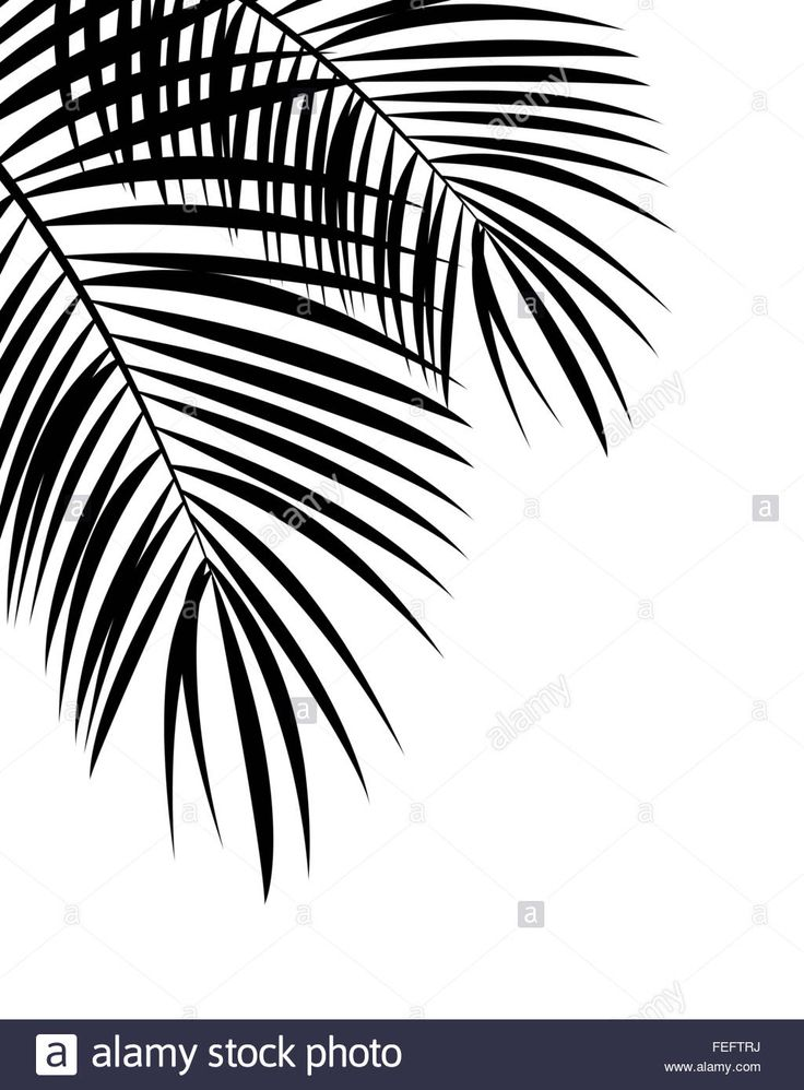 Palm Leaf Vector Background Illustration Stock Photo Lightsome In 2019 Leaves Vector Leaves
