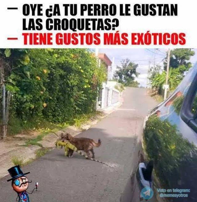 Untitled Funny Memes Pug Memes Spanish Humor