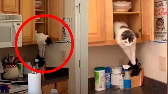 Mujer Deja A Solas A Su Gato En Casa Y Al Retornar Lo Encuentra En Curiosa Escena Casita Para Gatos Amantes De Los Gatos Gatos