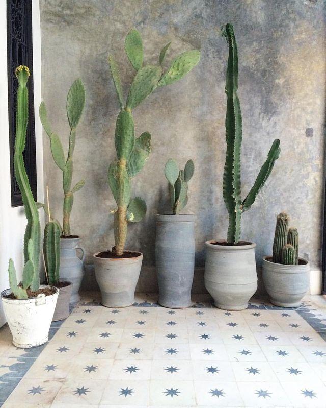 organic pottery, sculptural cacti, tile, wall finish
