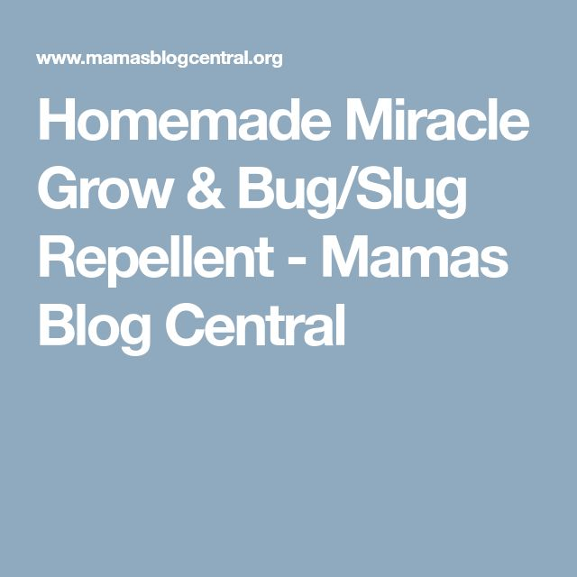 Homemade Miracle Grow & Bug/Slug Repellent - Mamas Blog Central