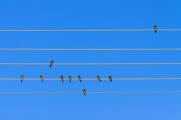Soms moet je met fotograferen ook een beetje mazzel hebben en op het juiste moment ergens zijn. Dat is het geval met deze foto van Zwaluwen in een mooie compositie.
