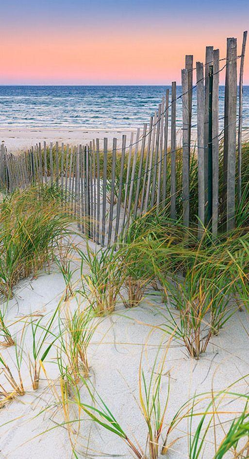 beach grass....