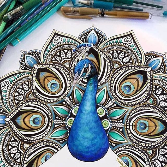 peacock drawing by kellylahar. Read Full article: http://webneel.com/bird-drawings | more http://webneel.com/daily .…