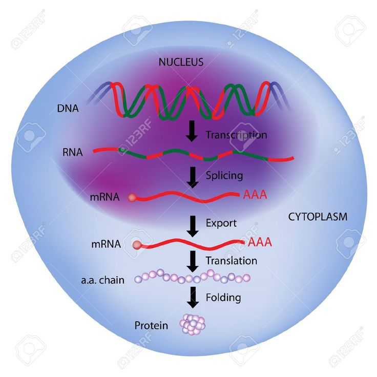 Read about a new study identifying signaling