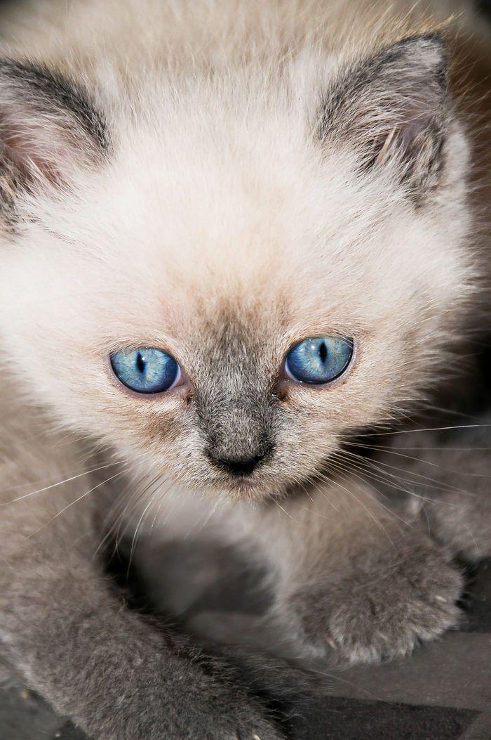Juste magnifique, si j'avais c'est yeux