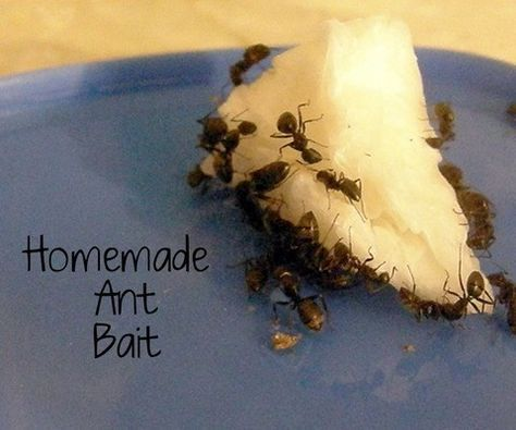 Last year we had horrible ants. Big, ugly black ants that kept biting Josiah and not letting go. All over the place. Finally, I found a recipe for ant bait that works! All of the store-bough…